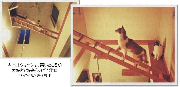 w_pet_8.jpg