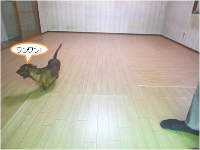 wadasekou20150810d.jpg
